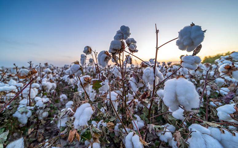 Китайская хлопковая ассоциация выступает против любых ограничений в отношении текстильной и швейной продукции Синьцзяна