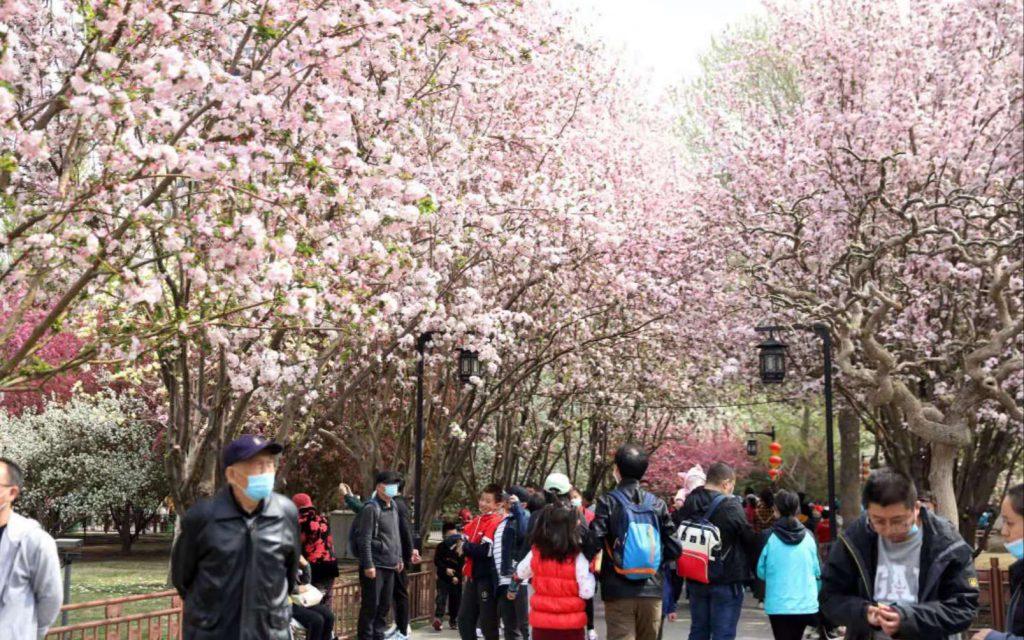 В период каникул по поводу праздника Цинмин туриндустрия Китая продемонстрировала уверенное восстановление