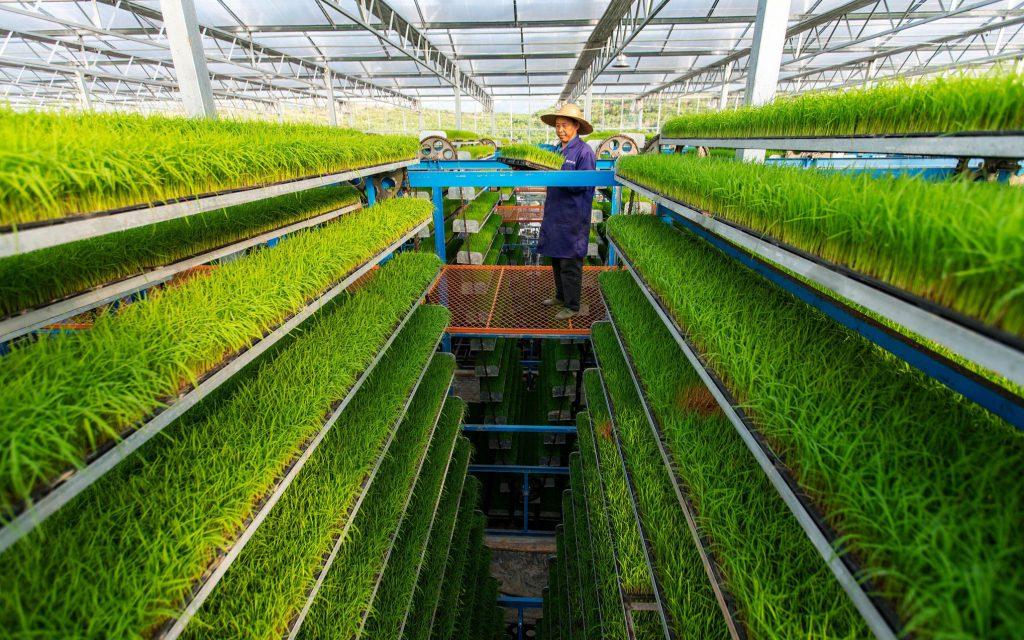 Китай сможет обеспечить свою продовольственную безопасность