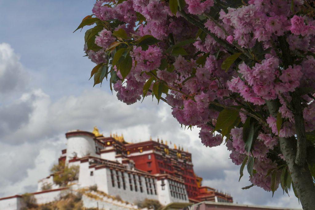 Путь процветания: Тибет 70 лет спустя