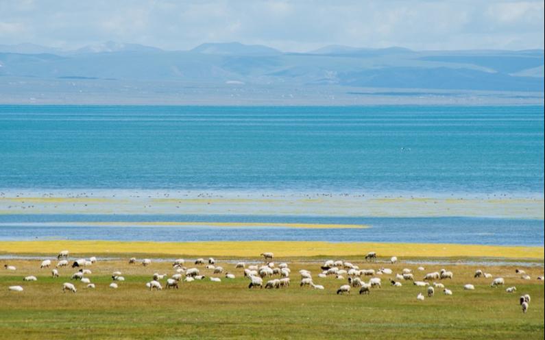 Си Цзиньпин подчеркнул важность охраны окружающей среды и высококачественного развития Цинхай-Тибетского нагорья