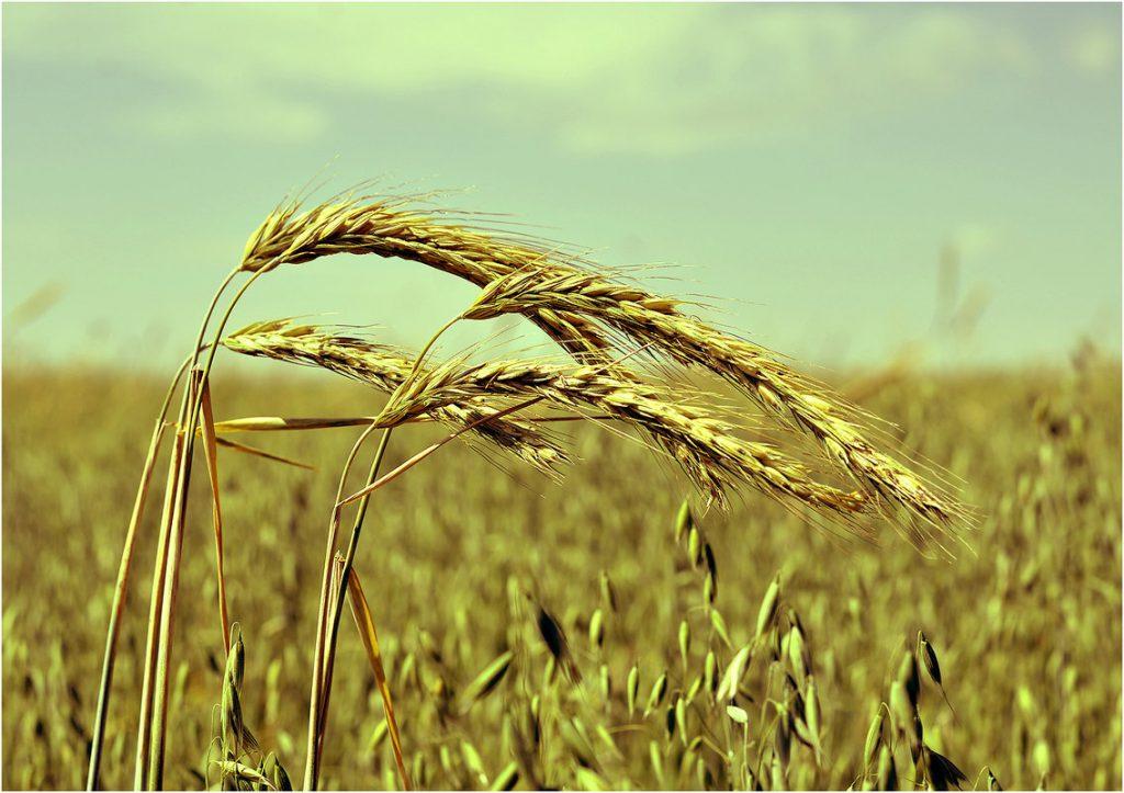 Си Цзиньпин поздравил китайских крестьян с наступающим Праздником урожая