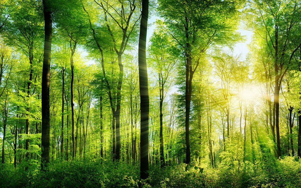 К концу 2025 года коэффициент лесного покрова в Китае достигнет 24,1%, а уровень защиты водно-болотных угодий – 55%