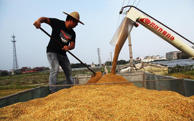 Валовой урожай раннего риса в Китае вырос на 2,7%