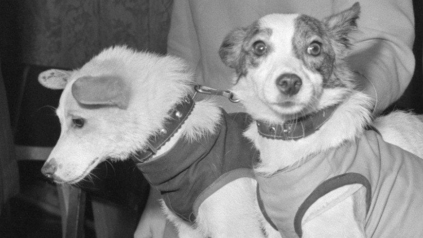 20 августа 1960 года на Землю вернулись запущенные в космос собаки Белка и Стрелка.