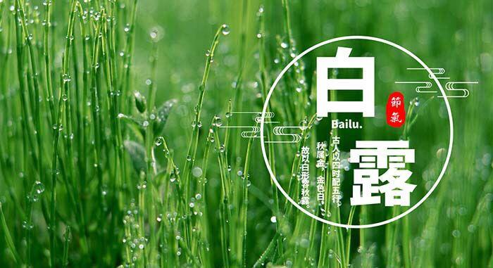 Сезон Байлу — Белые росы