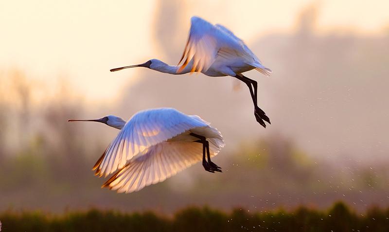 Конференция ООН о биоразнообразии в Куньмине станет крупнейшей за последние 10 лет